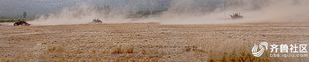 麦收3.jpg