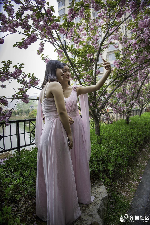 浪漫樱花季3