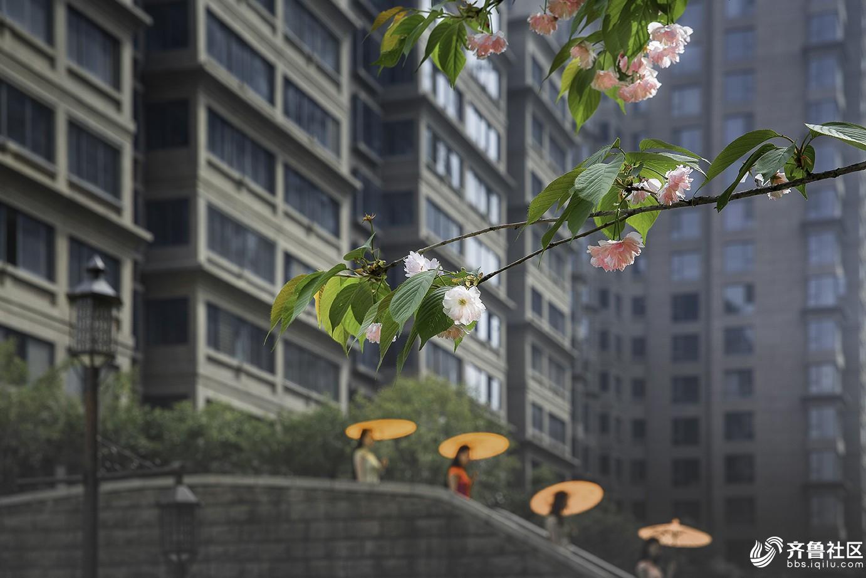 浪漫樱花季1