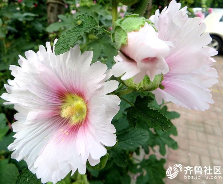 IMG_7065_副本.jpg