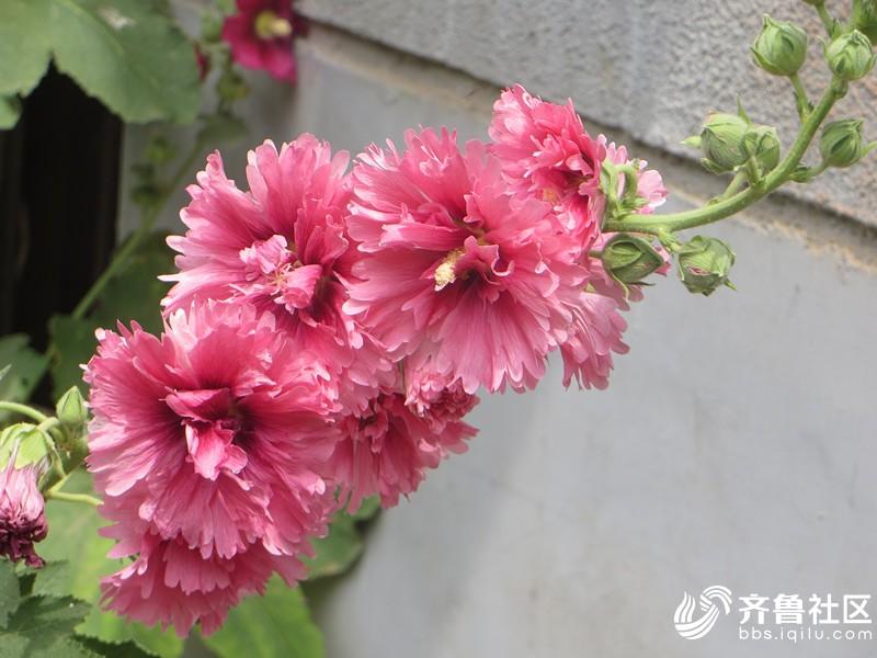 IMG_6992_副本.jpg