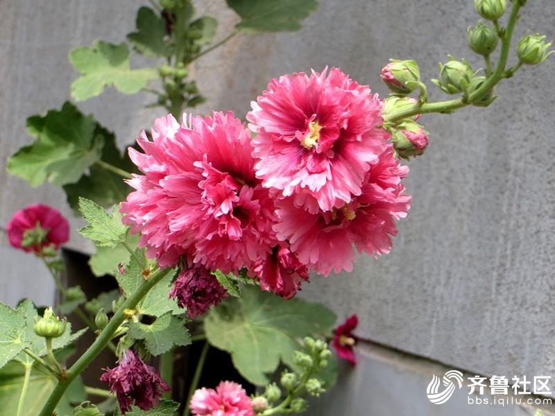 IMG_6991_副本.jpg