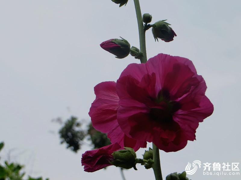 IMG_6974_副本.jpg