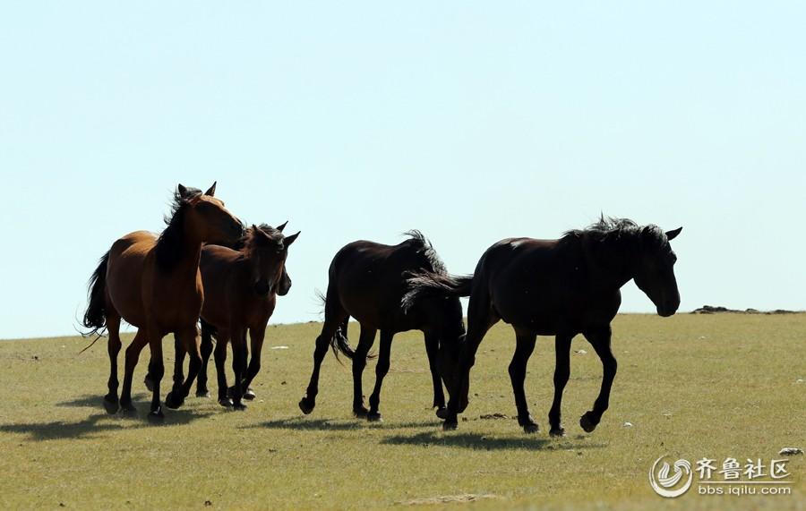 草原上的马儿