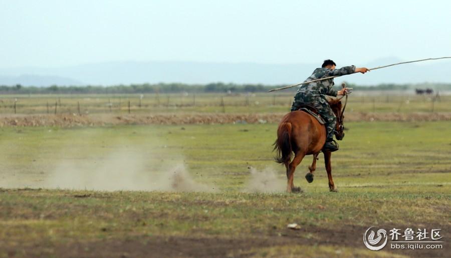 套马的汉子(2)