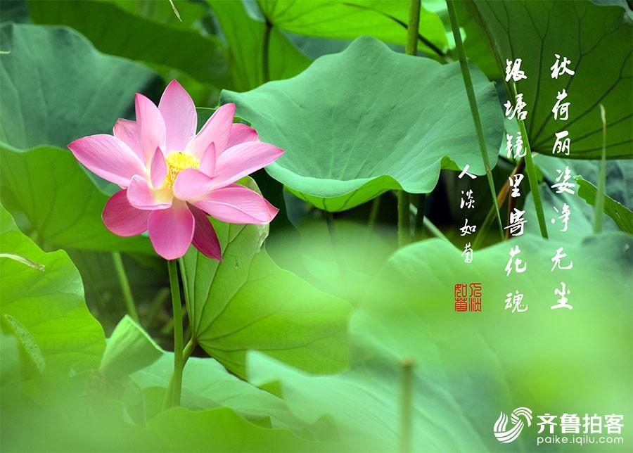 DSC_6995.jpg调.jpg