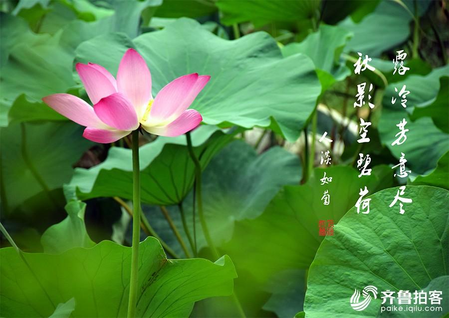 DSC_7010.jpg调.jpg