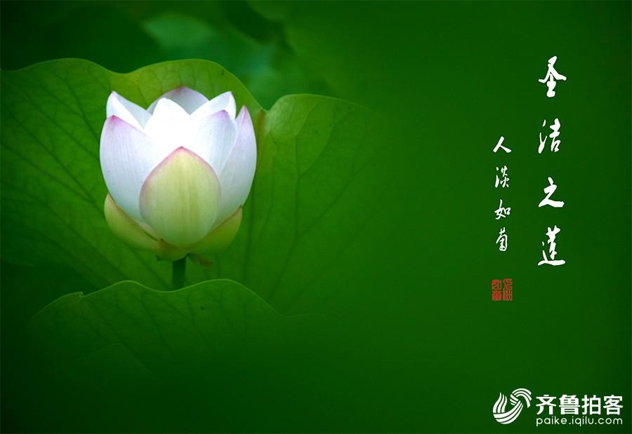 DSC_7017.jpg调.jpg