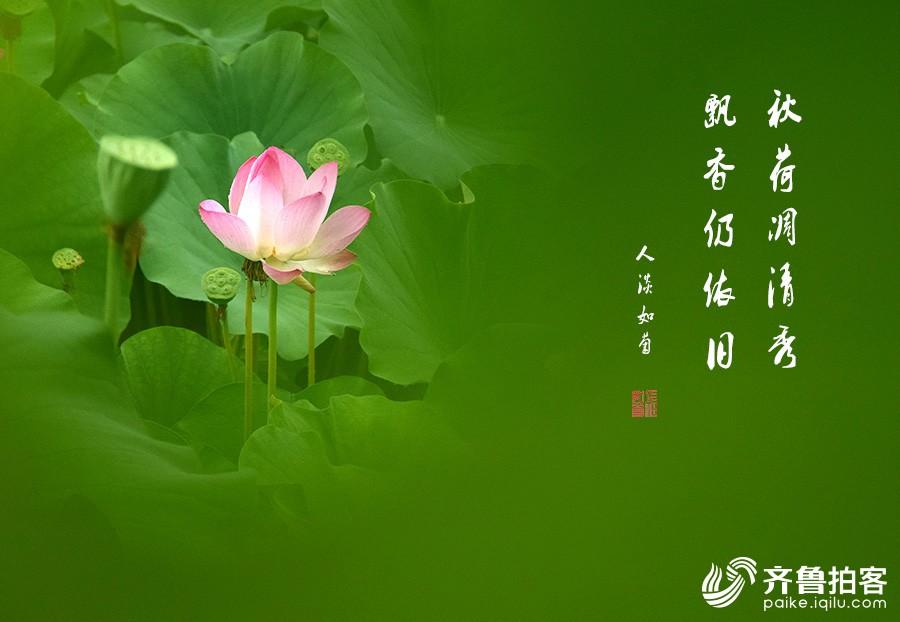 DSC_7031.jpg调1.jpg