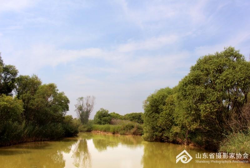 天然柳林.jpg