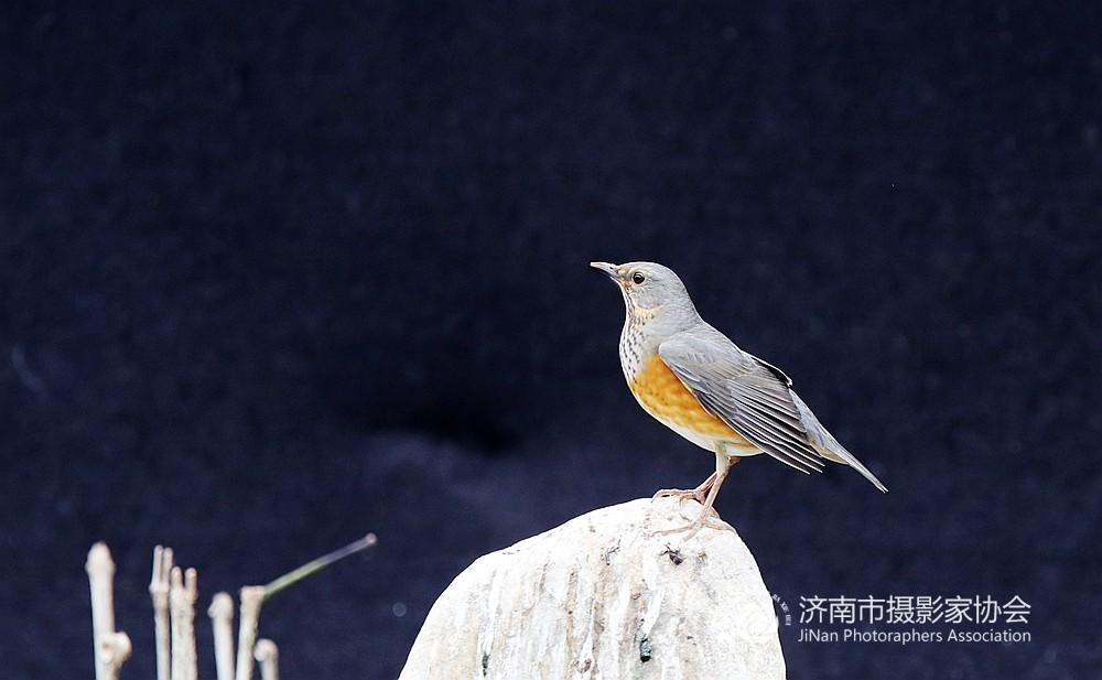 漂亮的小鸟