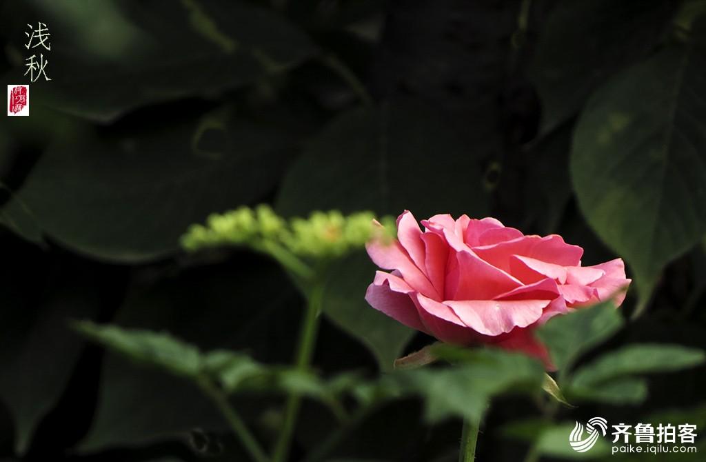 独爱一片秋叶—浅秋