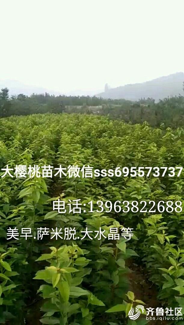 momo1504041897029_mh1505862301917.jpg