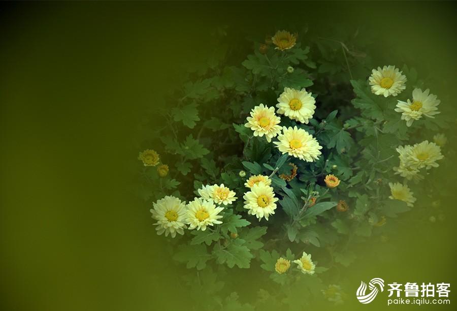 DSC_8556.jpg调.jpg