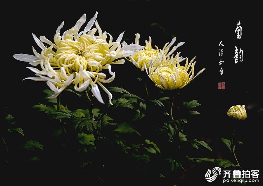 DSC_8992.jpg调.jpg1.jpg
