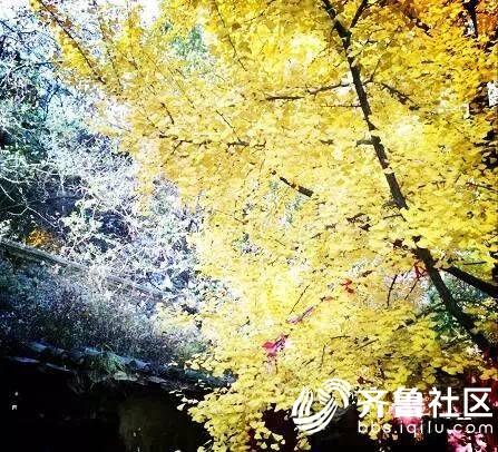 QQ图片20171105101747.jpg