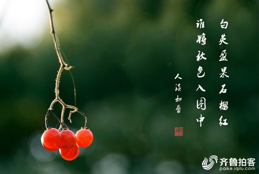 DSC_9585.jpg调1.jpg