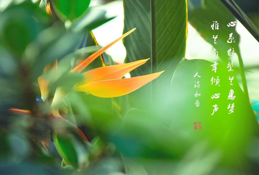 DSC_9753.jpg调1.jpg