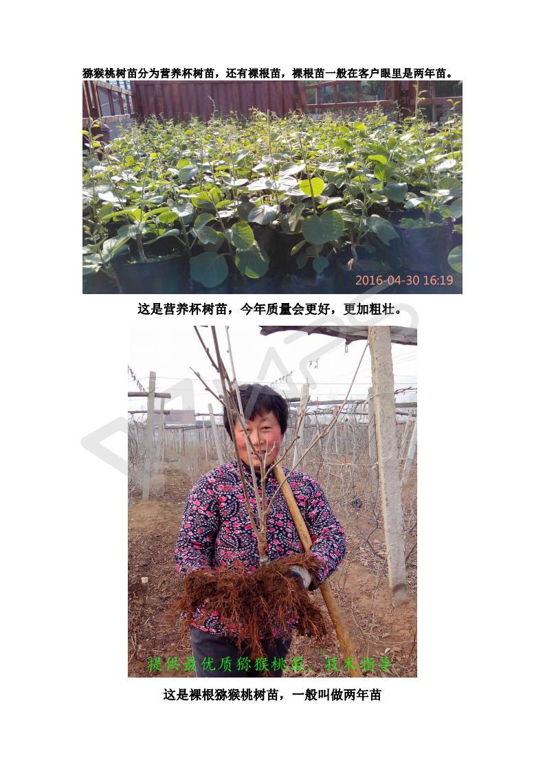猕猴桃树苗选择_01.jpg