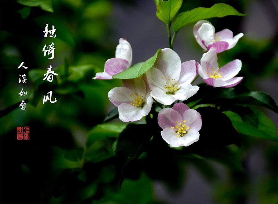 DSC_1193.jpg调.jpg