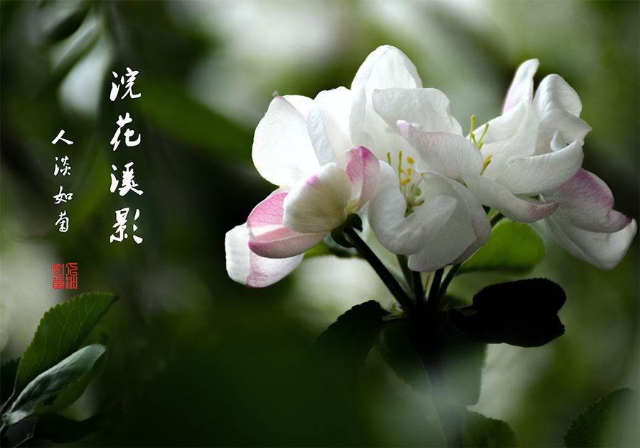 DSC_1195.jpg调.jpg