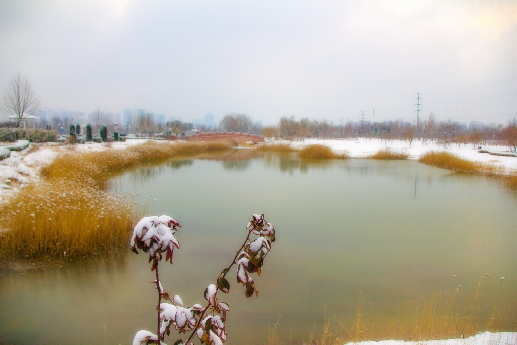 IMG-3995jpgA《雪压枝头》S.jpg