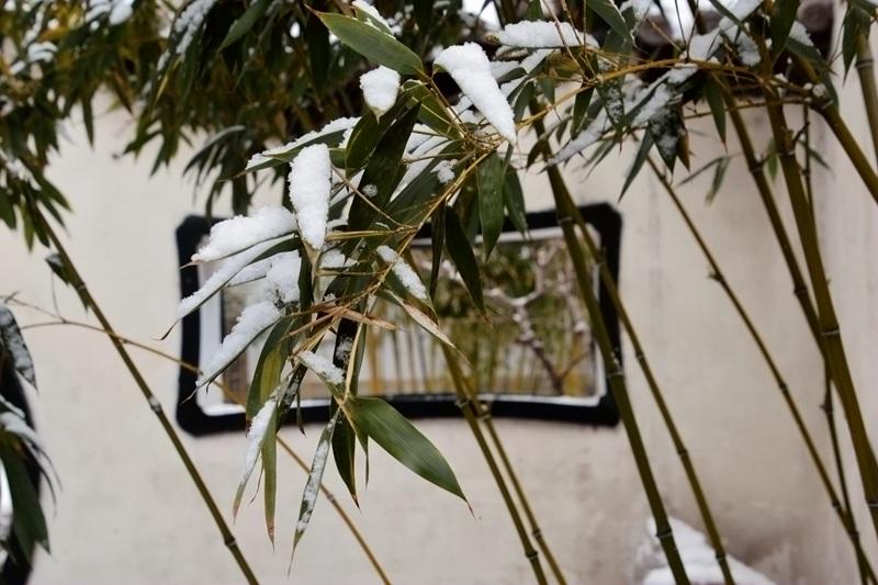 雪中十笏园061.jpg
