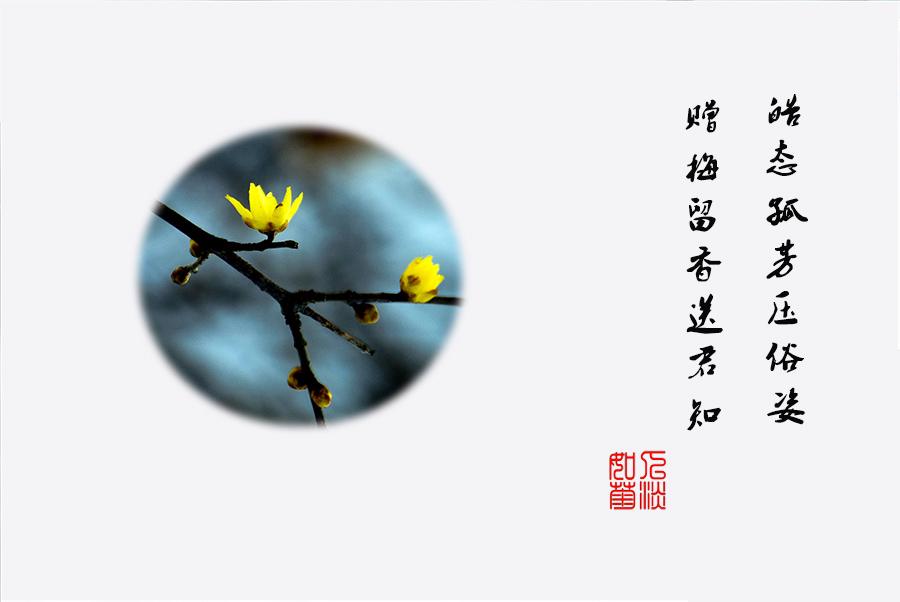 DSC_0229.jpg调1.jpg