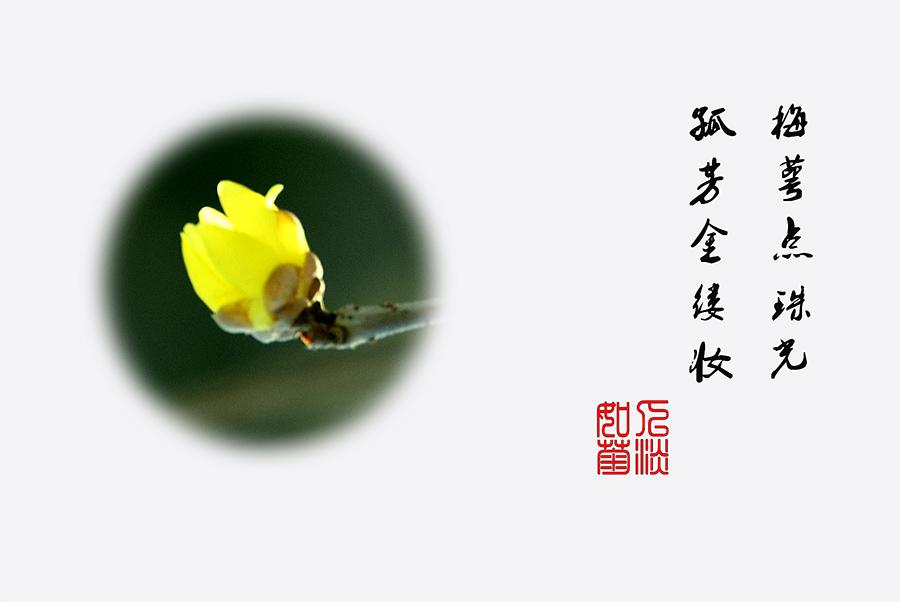 DSC_0227.jpg调.jpg