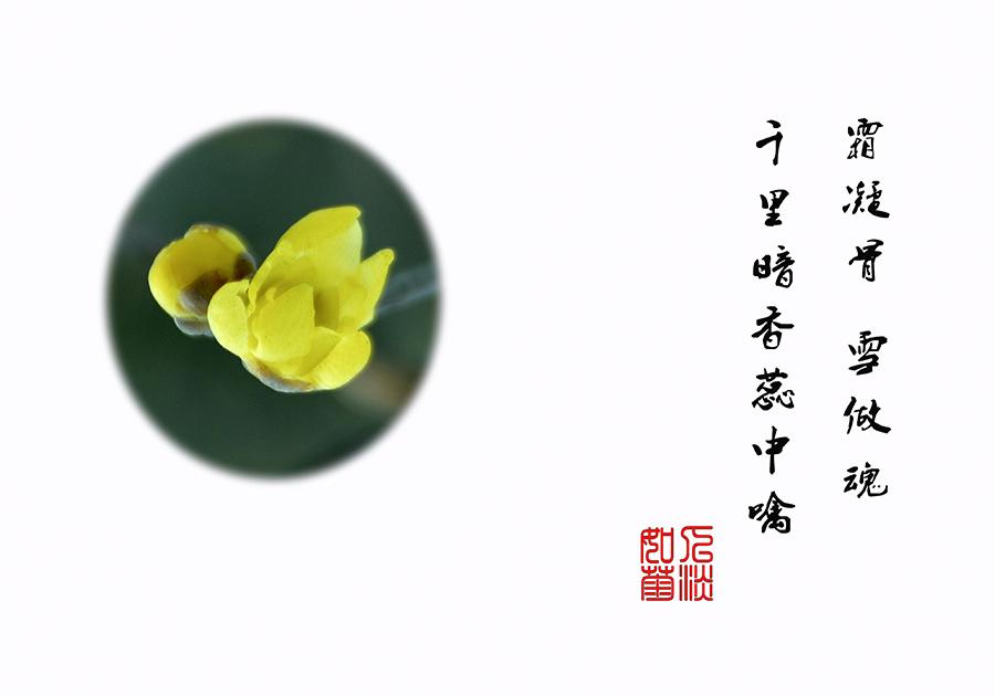 DSC_0234.jpg调.jpg