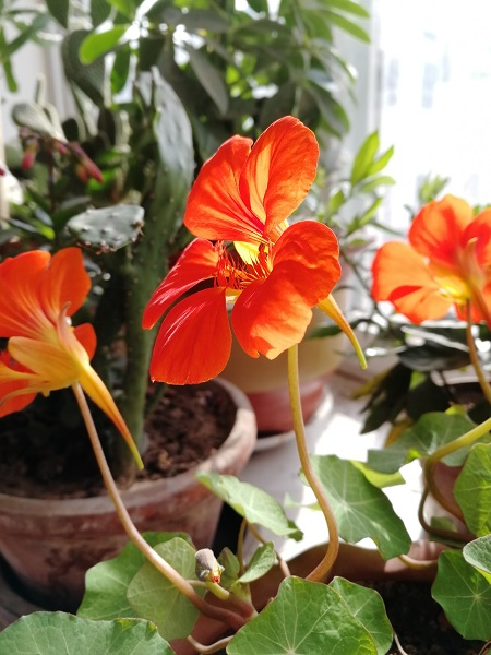 植物3 - 副本.jpg