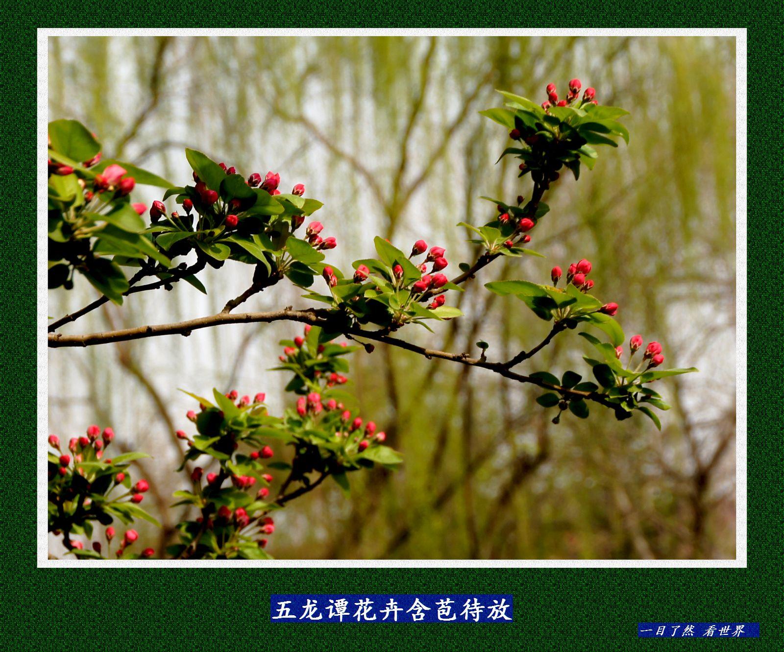 五龙谭花卉含苞待放-13-1600.jpg