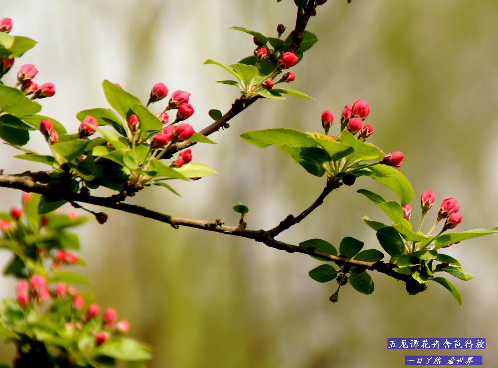 五龙谭花卉含苞待放-14-1600.jpg