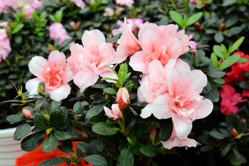 君泰花卉拍百花(48)