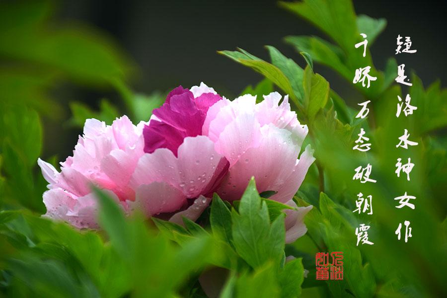 DSC_2064.jpg调1.jpg