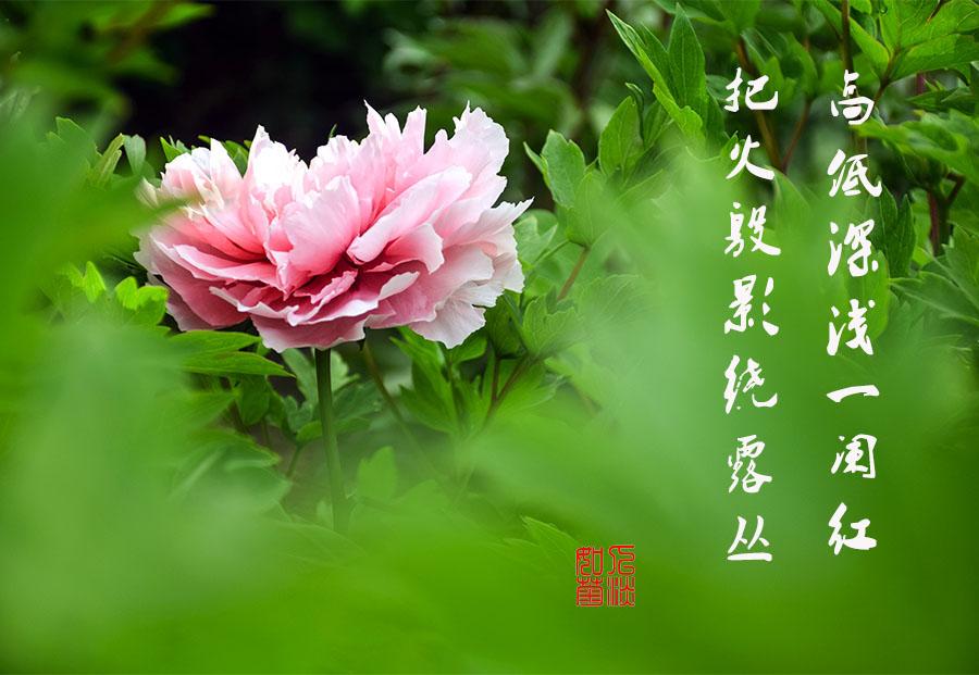 DSC_2032.jpg调1.jpg