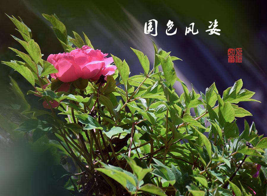 DSC_2294.jpg调.jpg