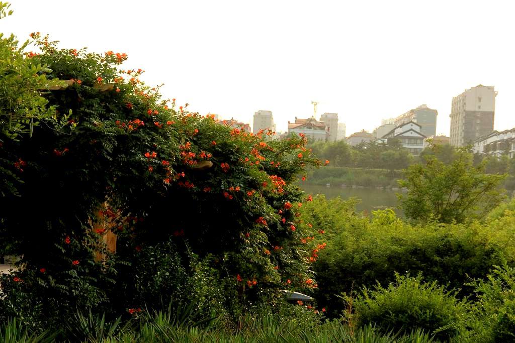 大汶河国家湿地公园随拍(1)