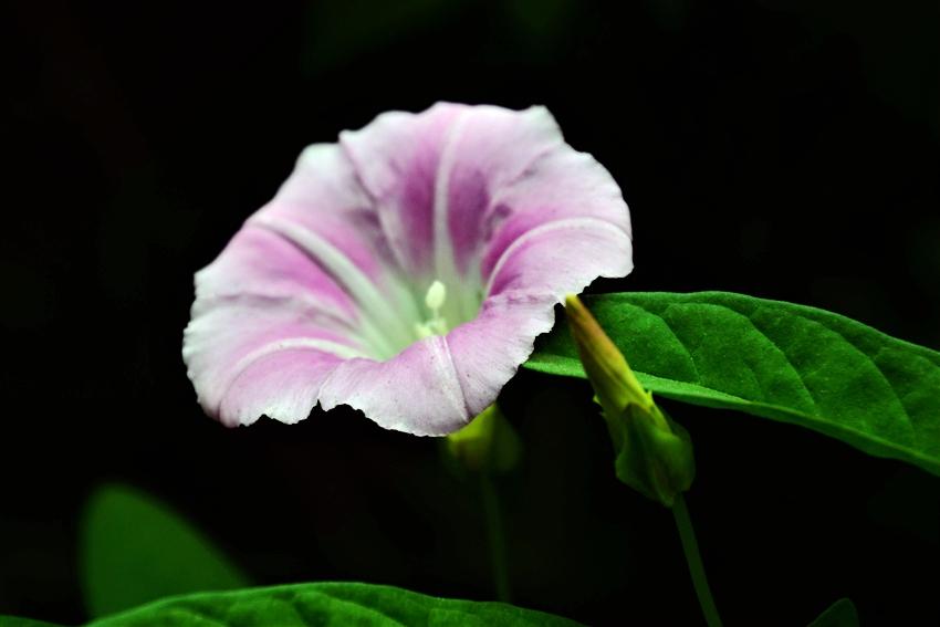 180604植物园拍花122.jpg