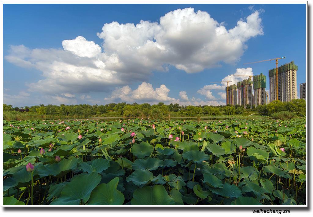 安丘的蓝天白云8.jpg