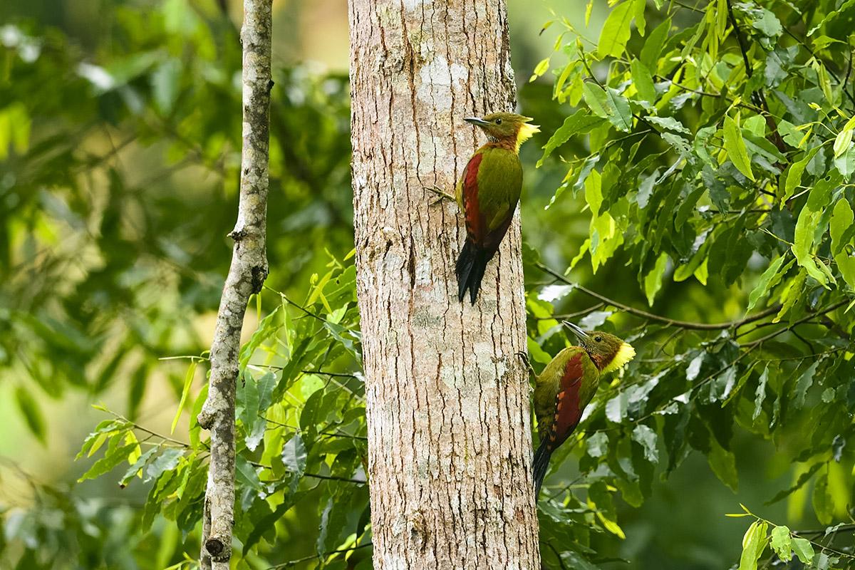 树上的鸟儿成双对