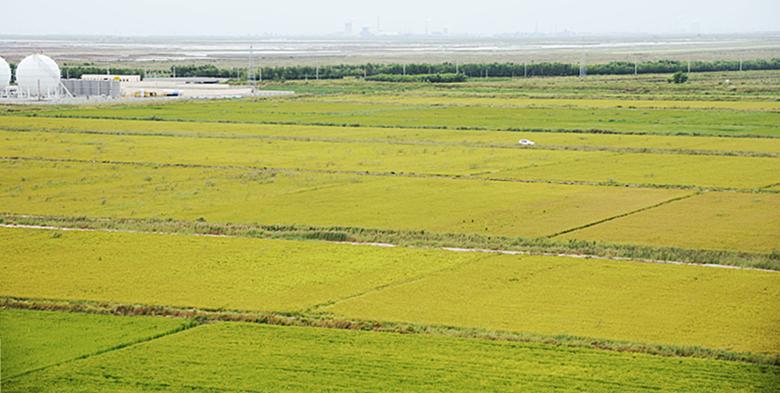 东营生态农业主战场