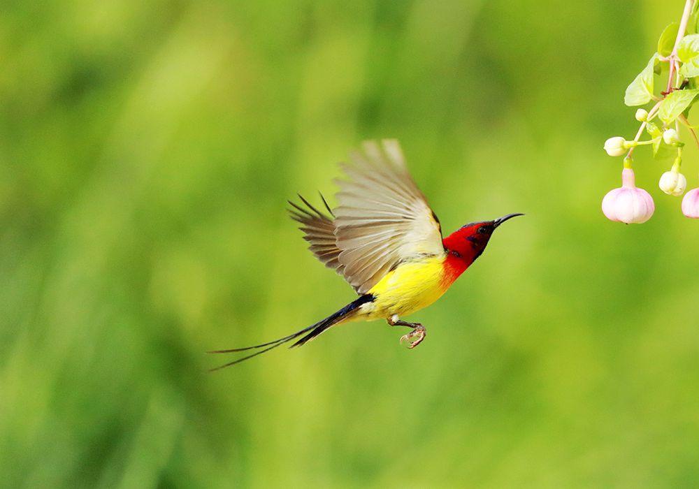 太阳鸟、、、