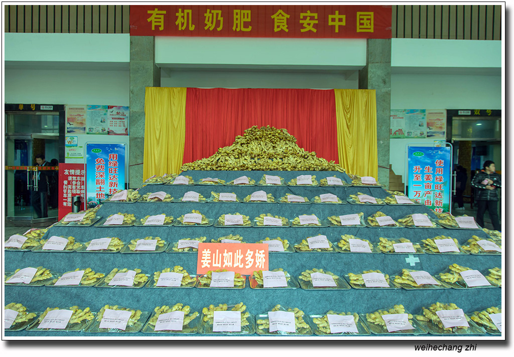 """首届绿旺达大姜文化节暨第八届""""绿旺达杯""""姜王大赛纪实"""