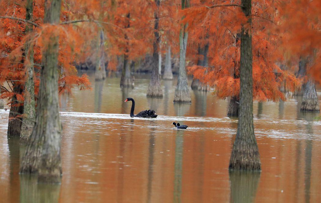 江苏池杉湖国家湿地公园2
