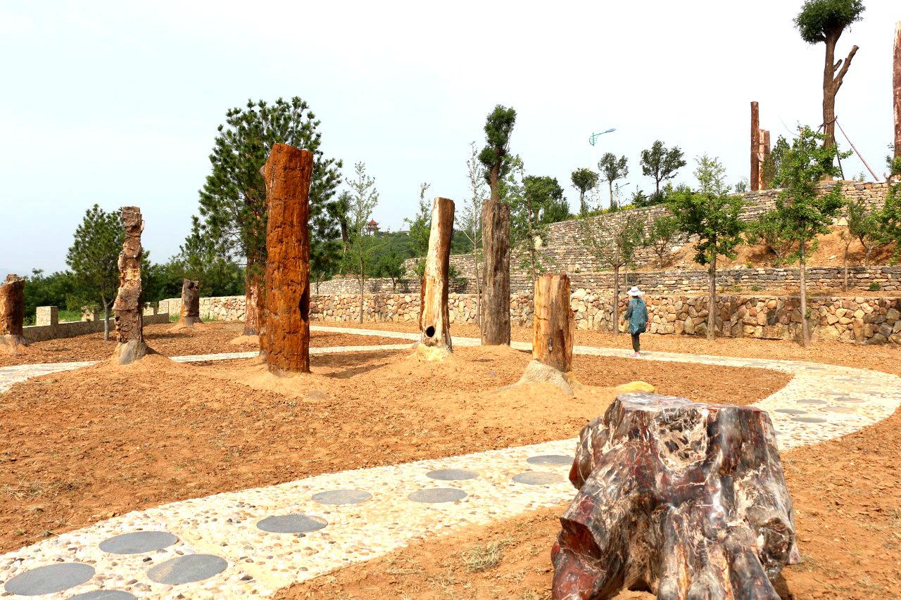 硅化木公园(7).jpg