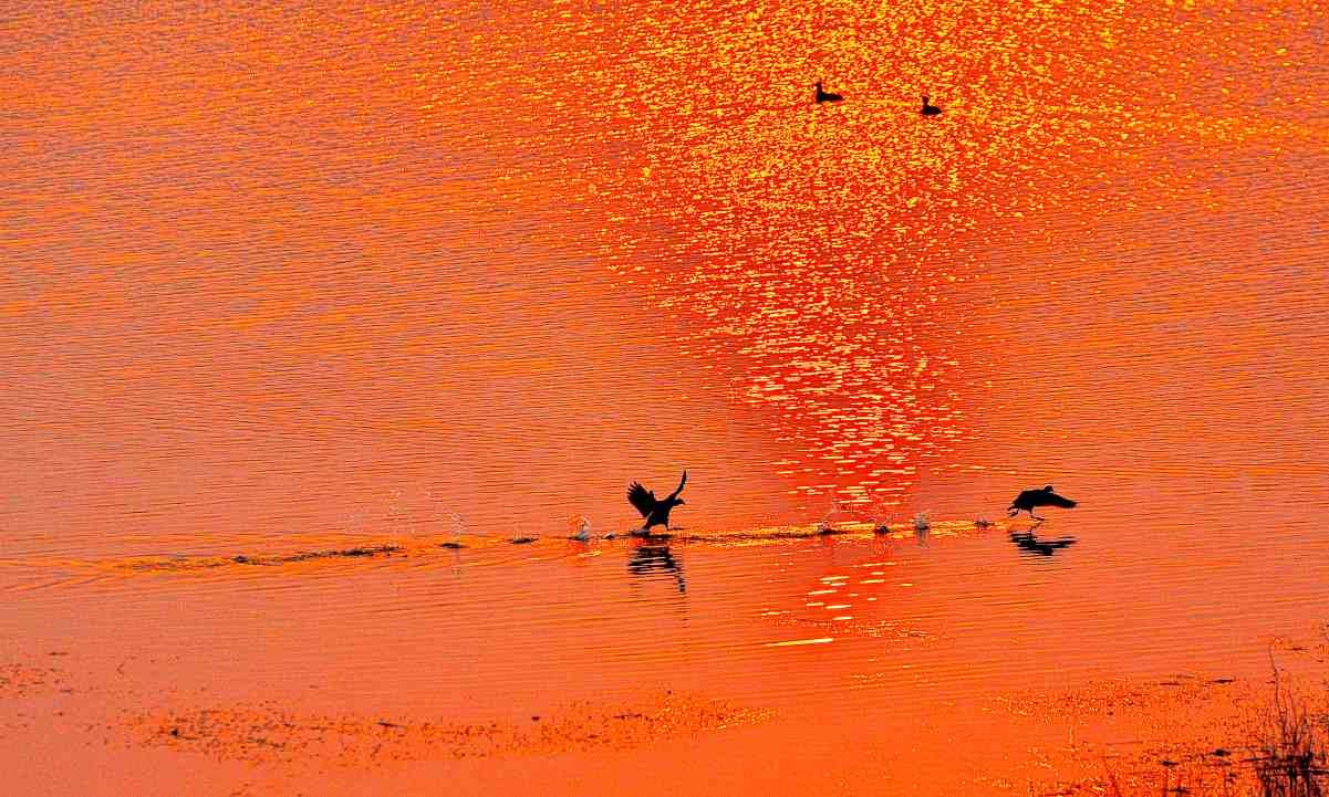 2018年总结帖:东溪湿地鸟儿欢