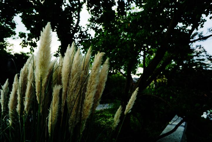 广富林文化遗址公园095.jpg