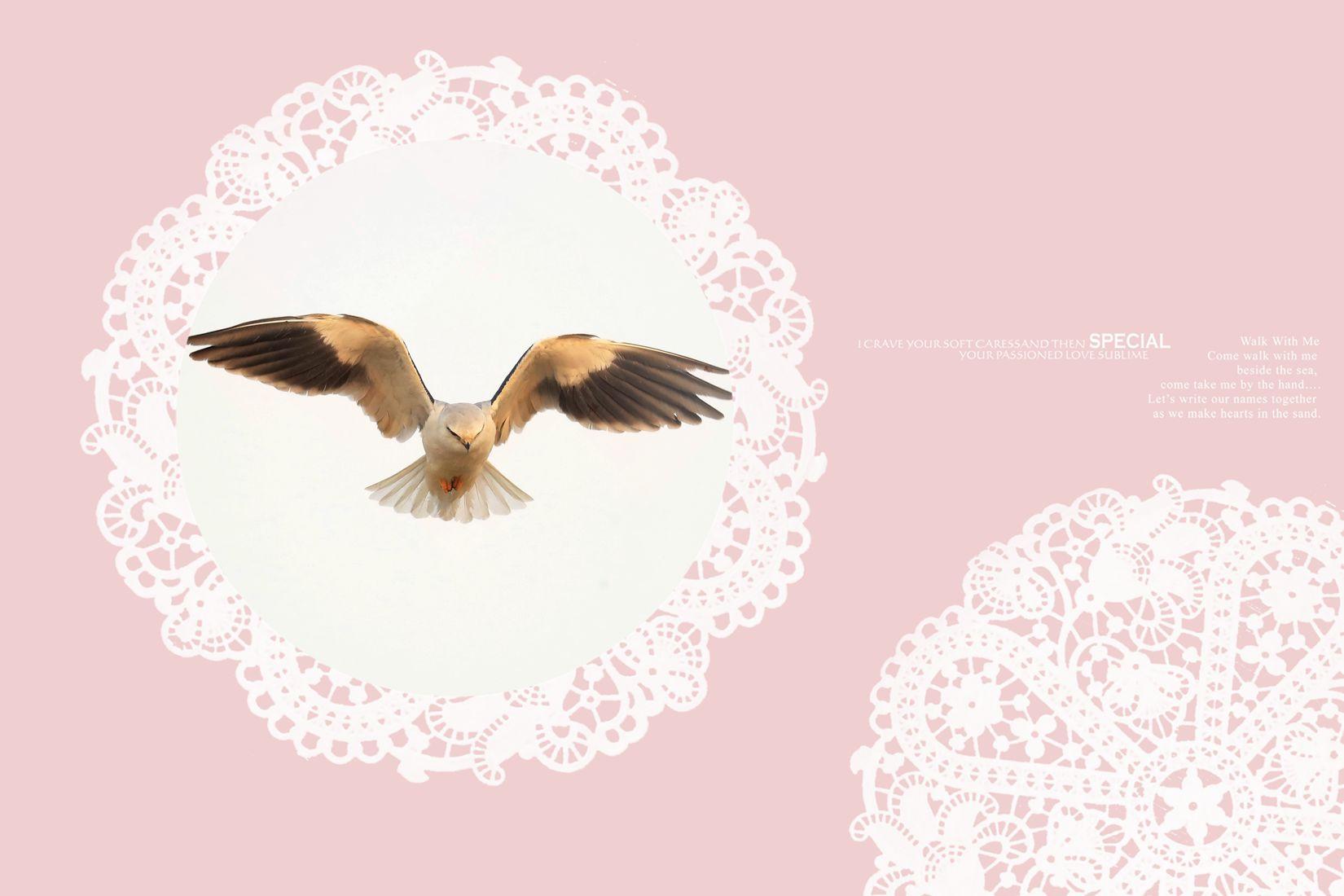 黑翅鸢、、、、、、