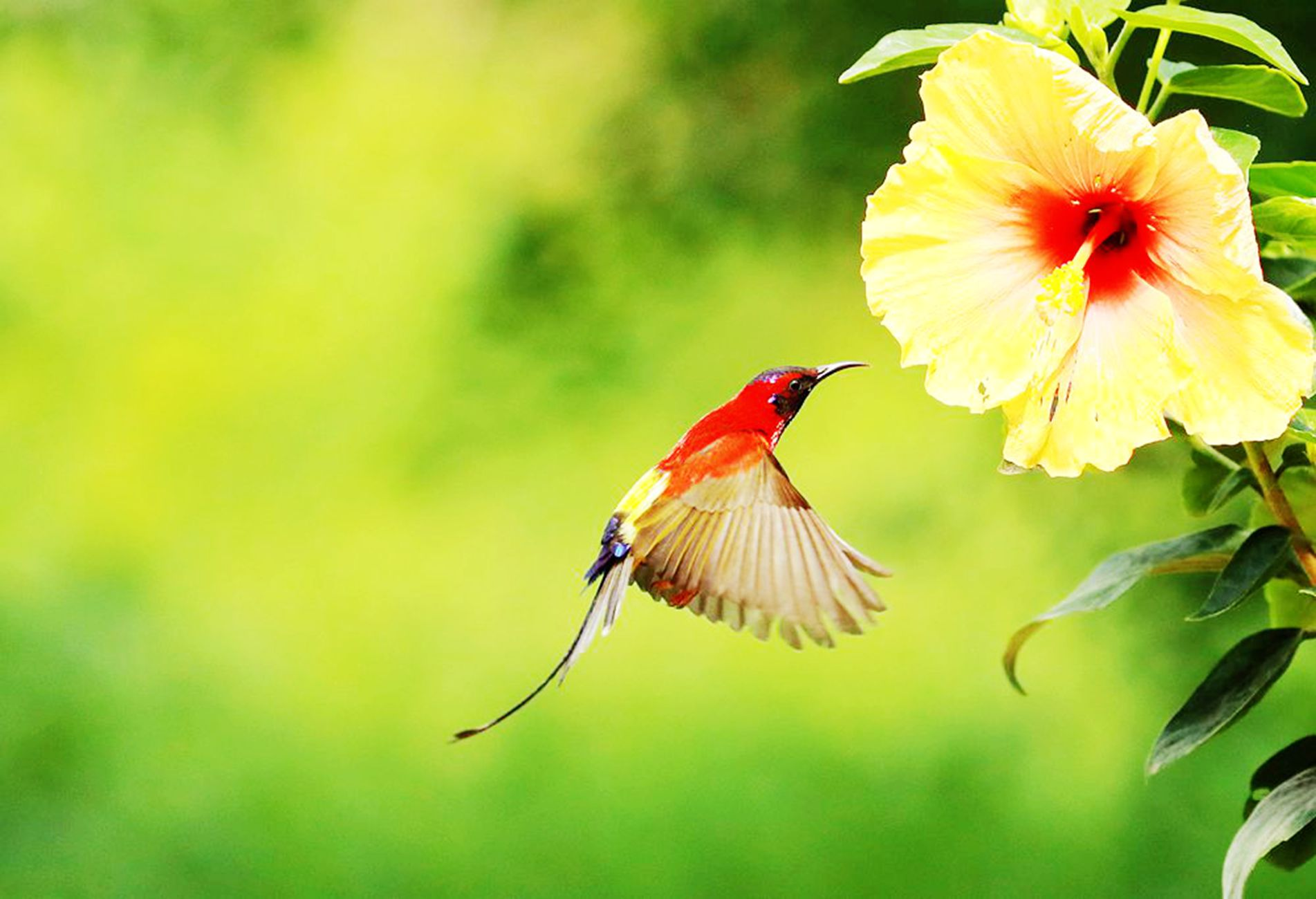 太阳鸟、、、、、